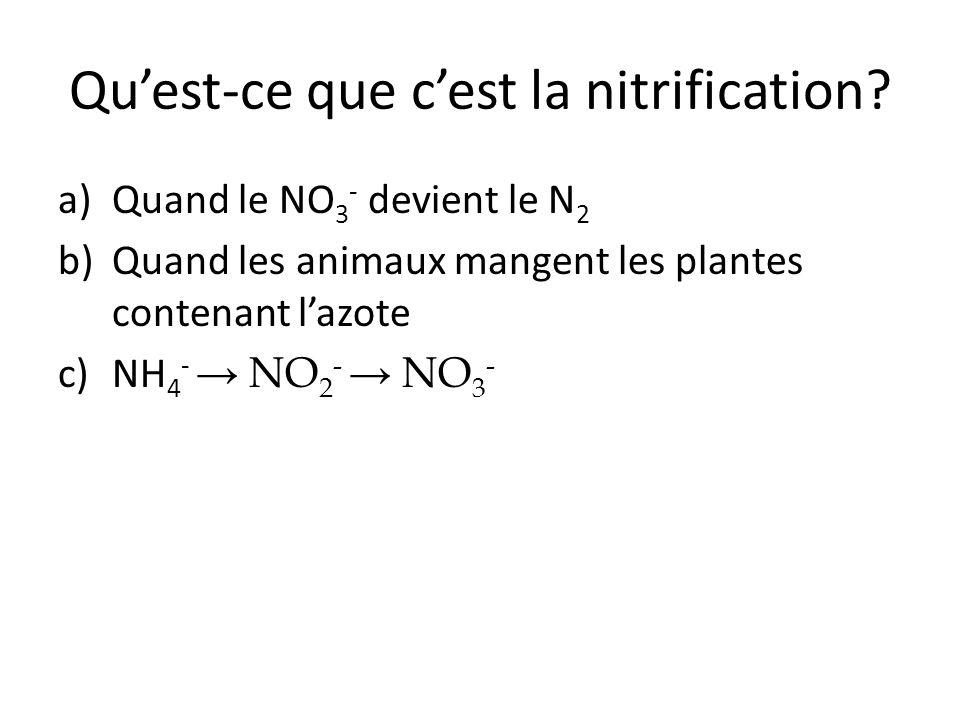 Qu'est-ce que c'est la nitrification