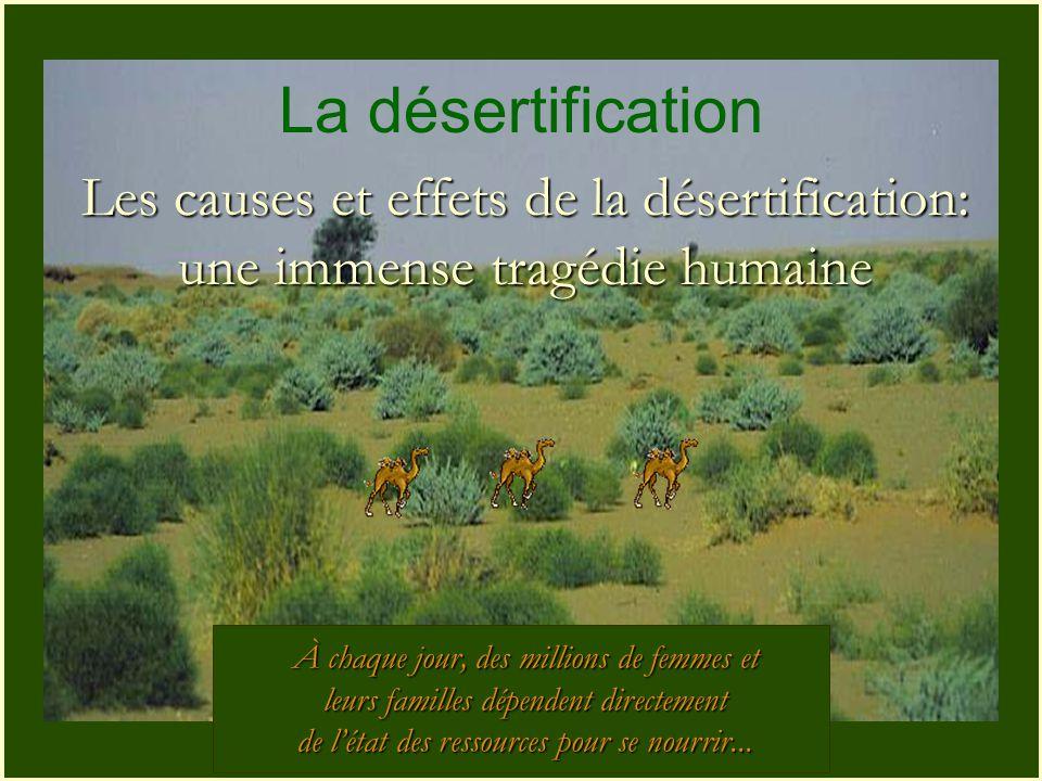 La désertification Les causes et effets de la désertification: une immense tragédie humaine. À chaque jour, des millions de femmes et.