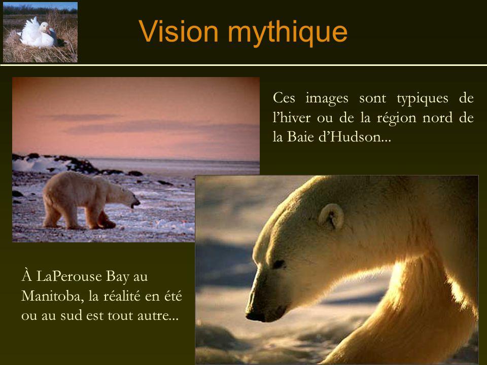 Vision mythique Ces images sont typiques de l'hiver ou de la région nord de la Baie d'Hudson...