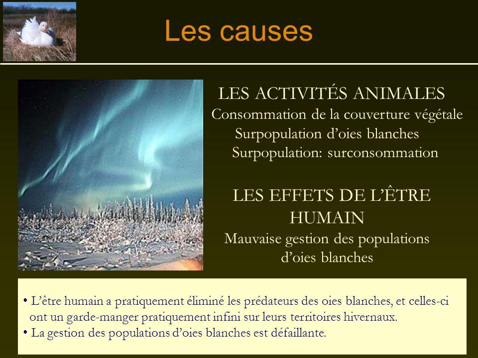 Les causes LES ACTIVITÉS ANIMALES LES EFFETS DE L'ÊTRE HUMAIN