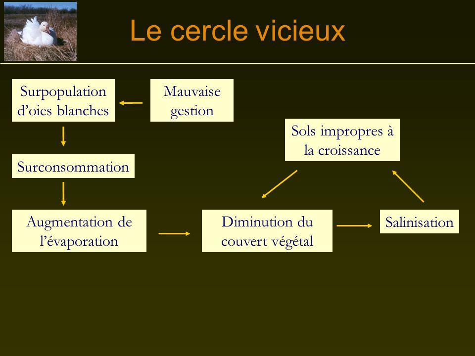 Le cercle vicieux Surpopulation d'oies blanches Mauvaise gestion