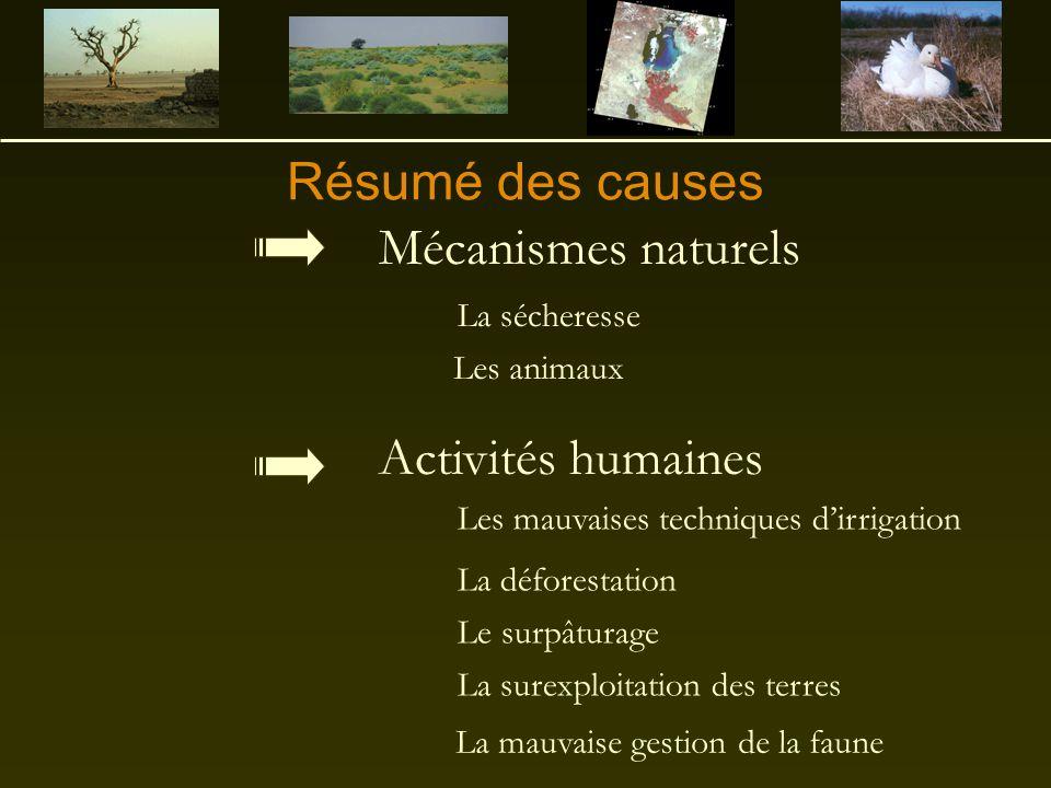 Résumé des causes Activités humaines Mécanismes naturels La sécheresse