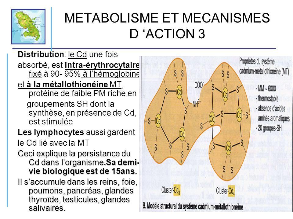 METABOLISME ET MECANISMES D 'ACTION 3