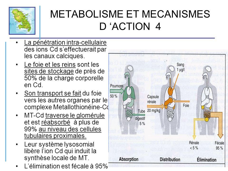 METABOLISME ET MECANISMES D 'ACTION 4