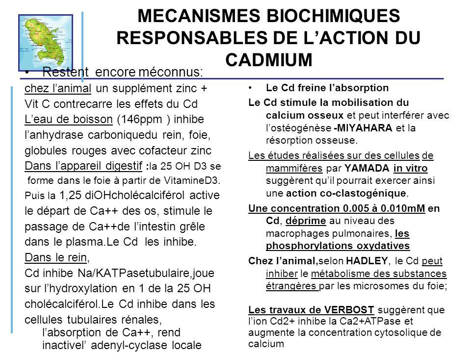 MECANISMES BIOCHIMIQUES RESPONSABLES DE L'ACTION DU CADMIUM