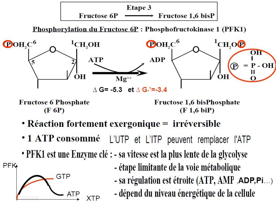 ∆ G= -5.3 et ∆ G°'=-3.4 ,ADP,Pi…) GTP ATP PFK XTP