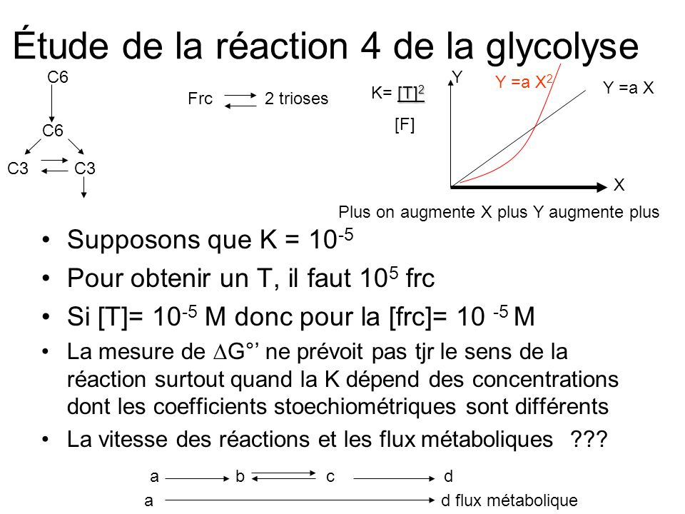 Étude de la réaction 4 de la glycolyse