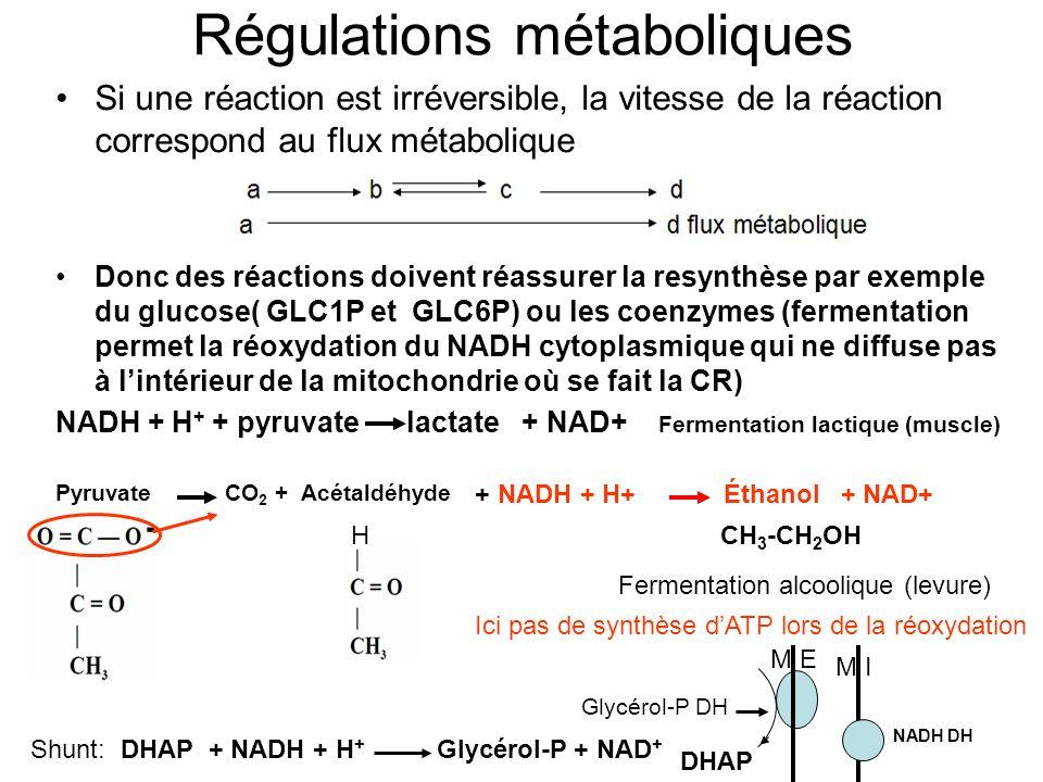 Régulations métaboliques