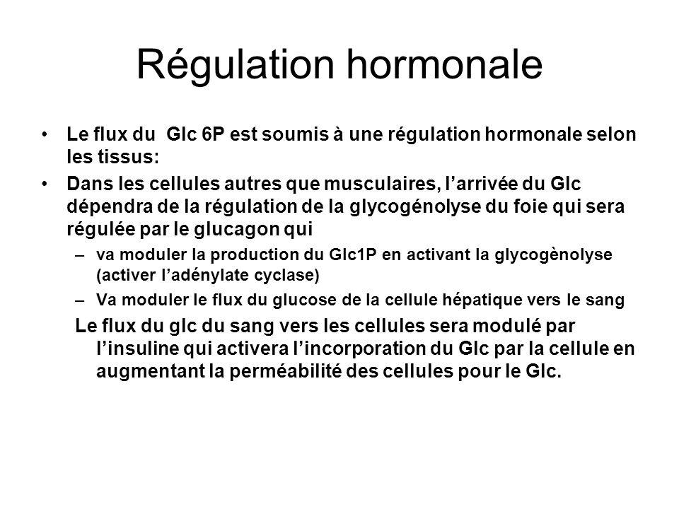 Régulation hormonale Le flux du Glc 6P est soumis à une régulation hormonale selon les tissus: