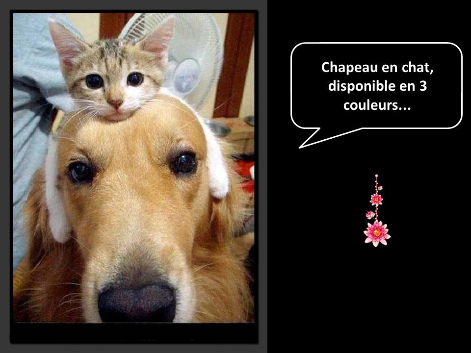 Chapeau en chat, disponible en 3 couleurs...