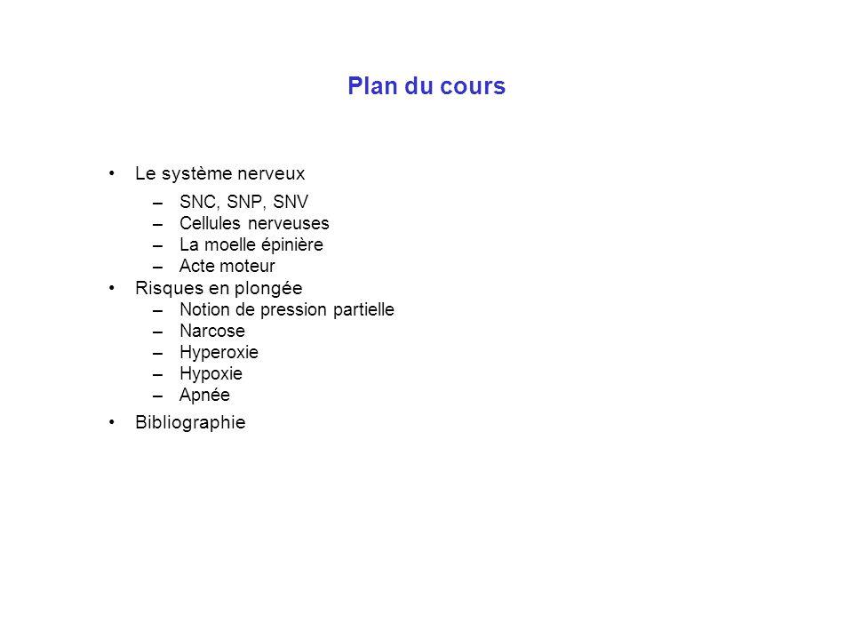 Plan du cours Le système nerveux Risques en plongée Bibliographie