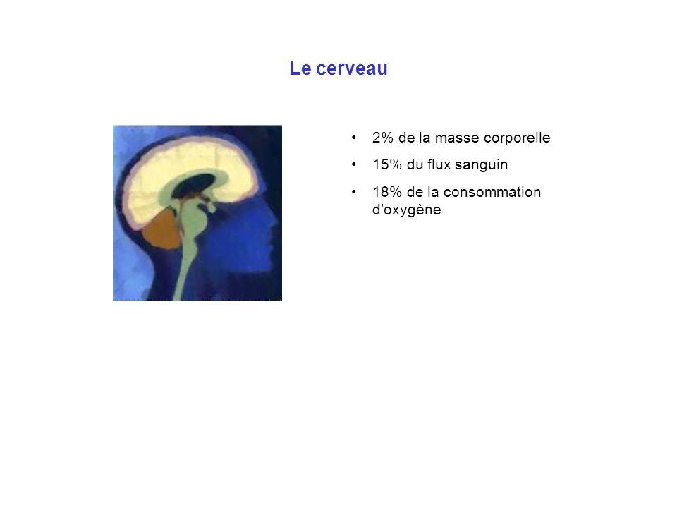 Le cerveau 2% de la masse corporelle 15% du flux sanguin