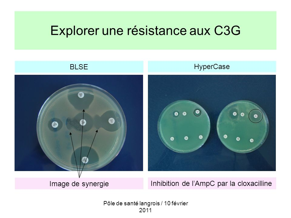 Explorer une résistance aux C3G