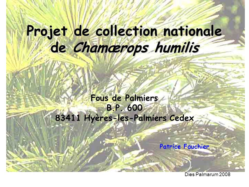 Projet de collection nationale de Chamærops humilis
