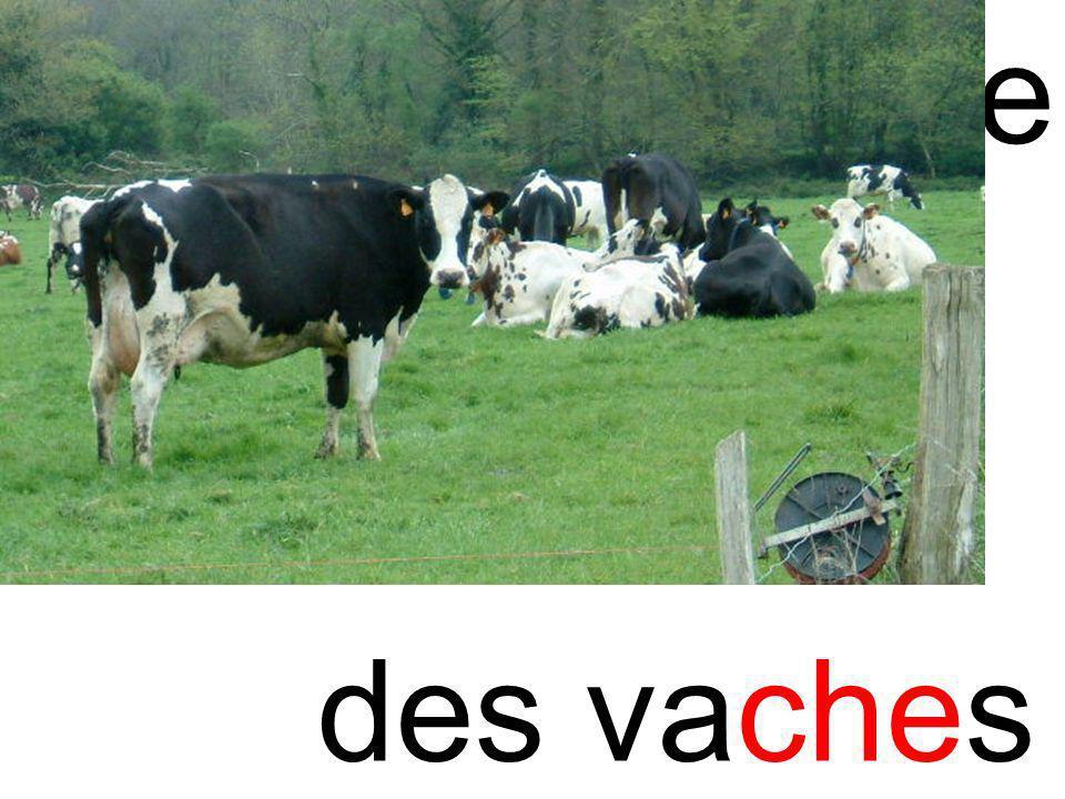 che vache des vaches