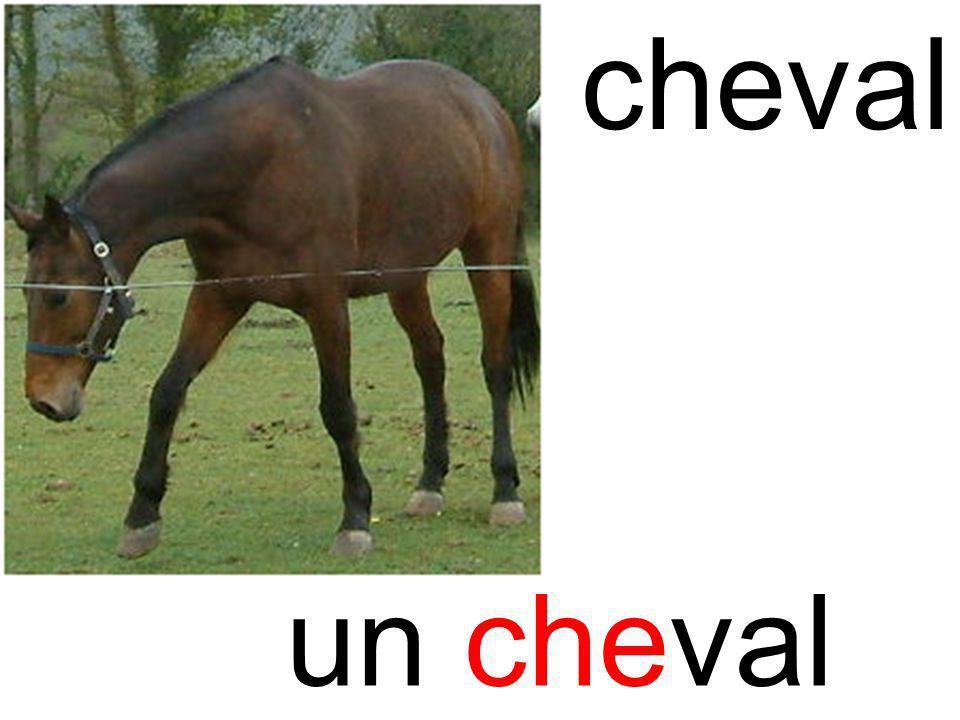 che cheval un cheval