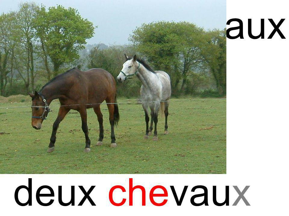 che chevaux deux chevaux