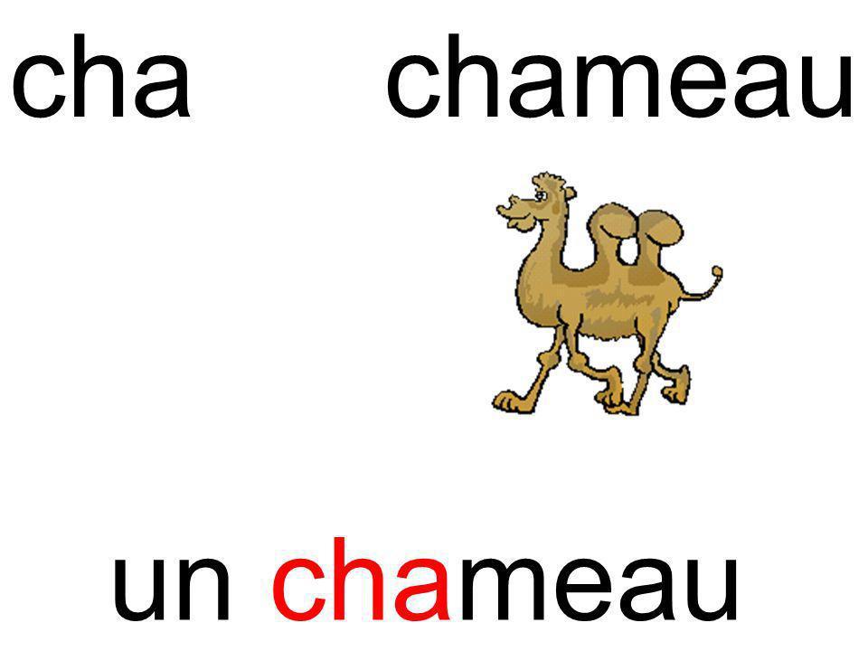 cha chameau un chameau