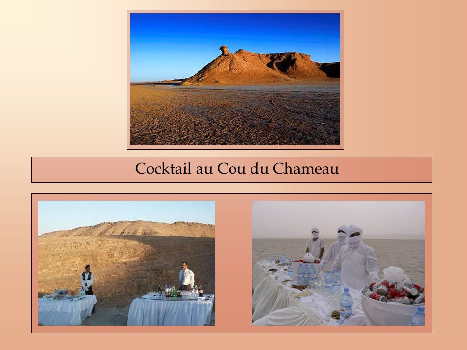 Cocktail au Cou du Chameau
