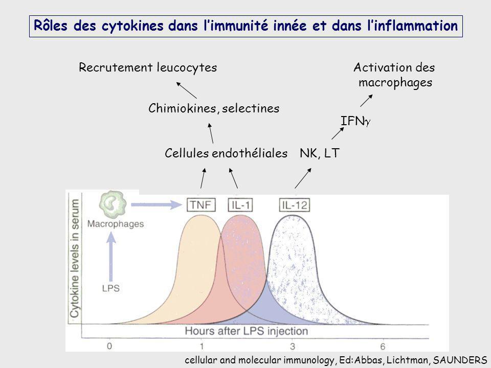 Rôles des cytokines dans l'immunité innée et dans l'inflammation