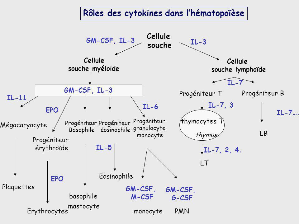 Rôles des cytokines dans l'hématopoïèse