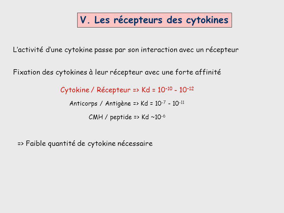 V. Les récepteurs des cytokines