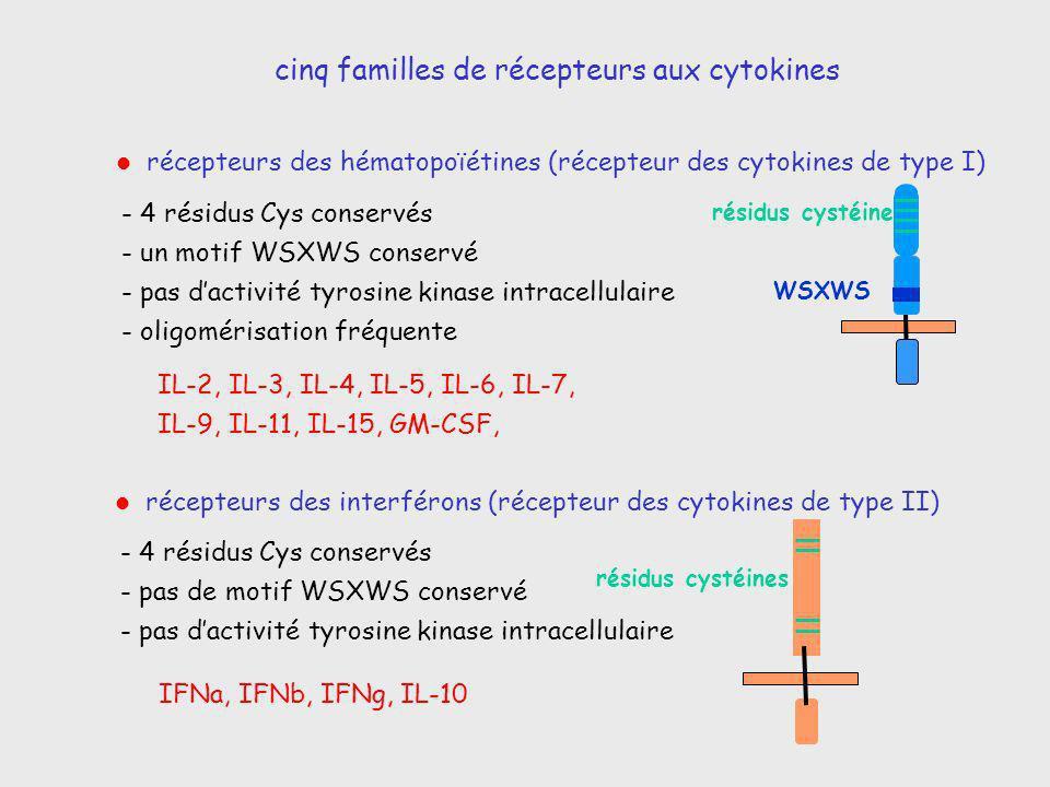 cinq familles de récepteurs aux cytokines