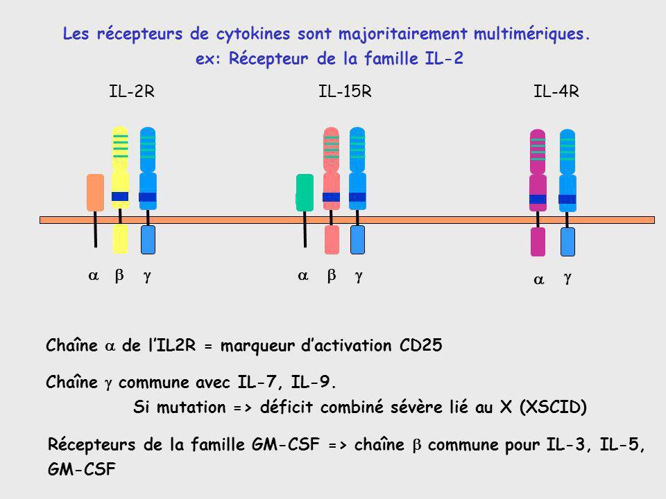 Les récepteurs de cytokines sont majoritairement multimériques.
