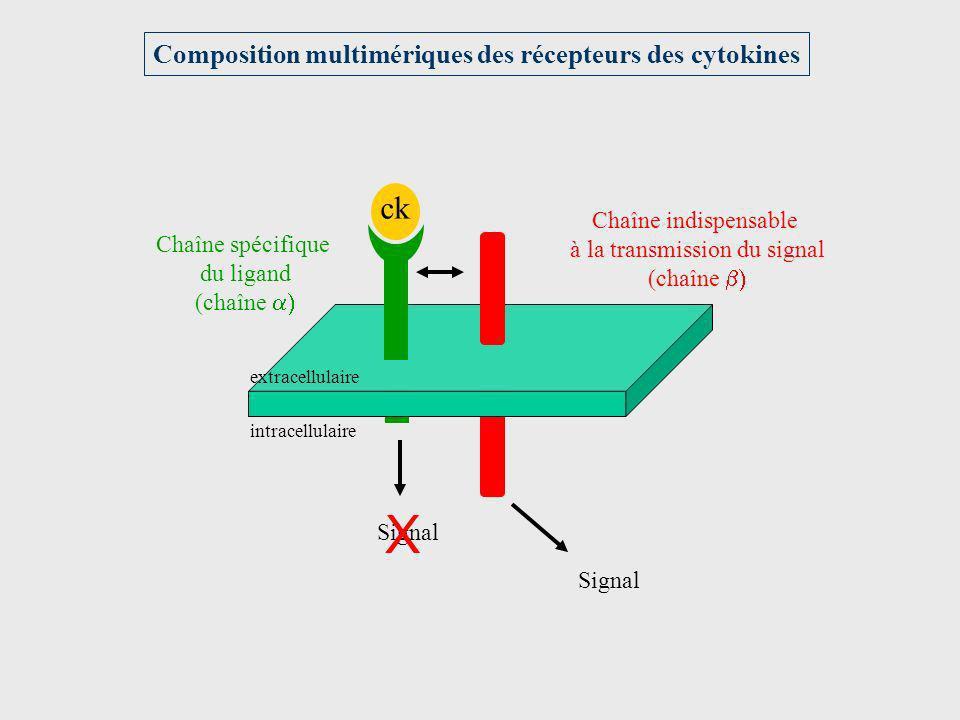Composition multimériques des récepteurs des cytokines