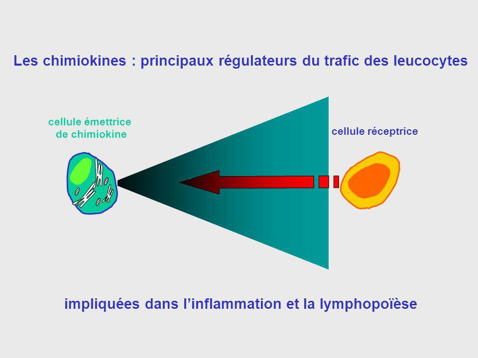 Les chimiokines : principaux régulateurs du trafic des leucocytes