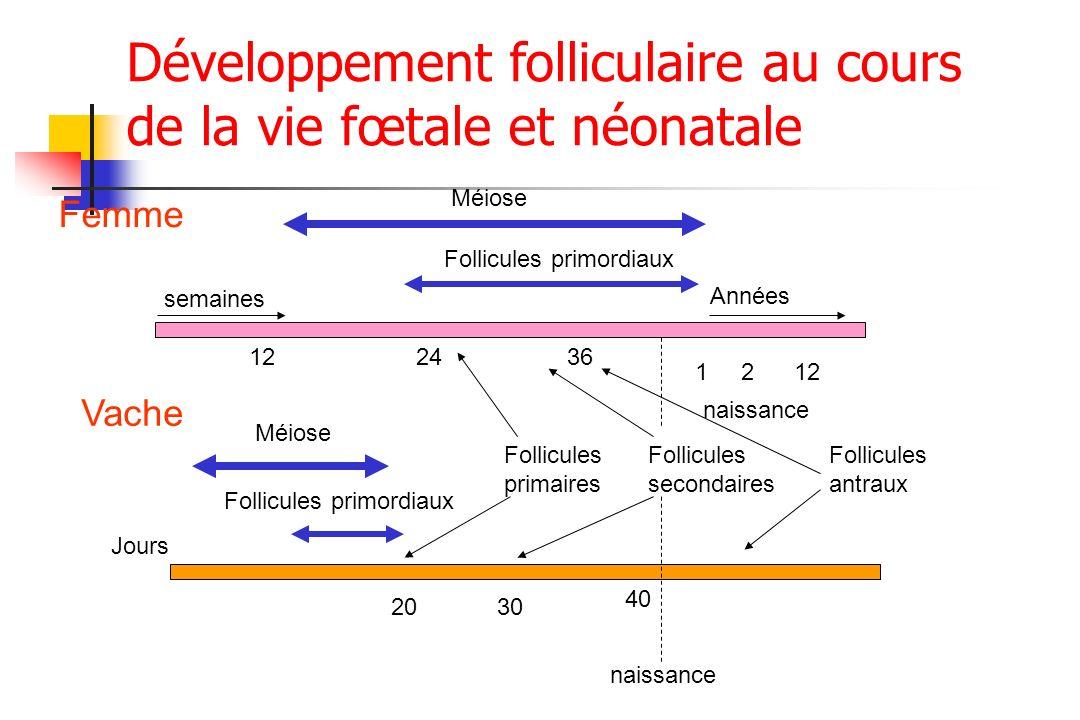 Développement folliculaire au cours de la vie fœtale et néonatale