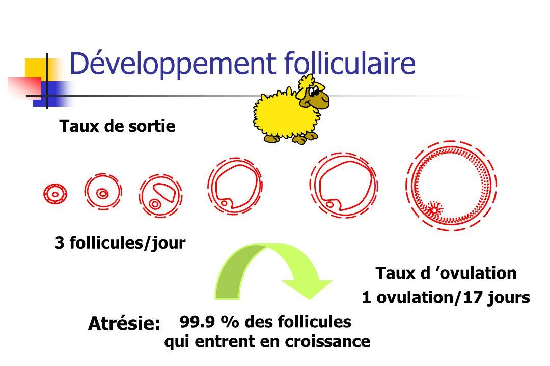 Développement folliculaire