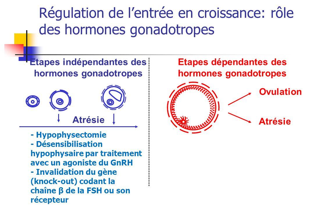 Régulation de l'entrée en croissance: rôle des hormones gonadotropes