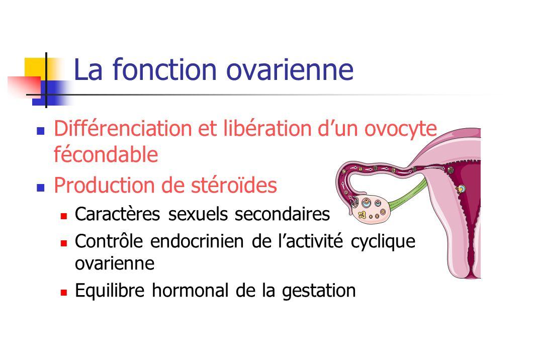 La fonction ovarienne Différenciation et libération d'un ovocyte fécondable. Production de stéroïdes.