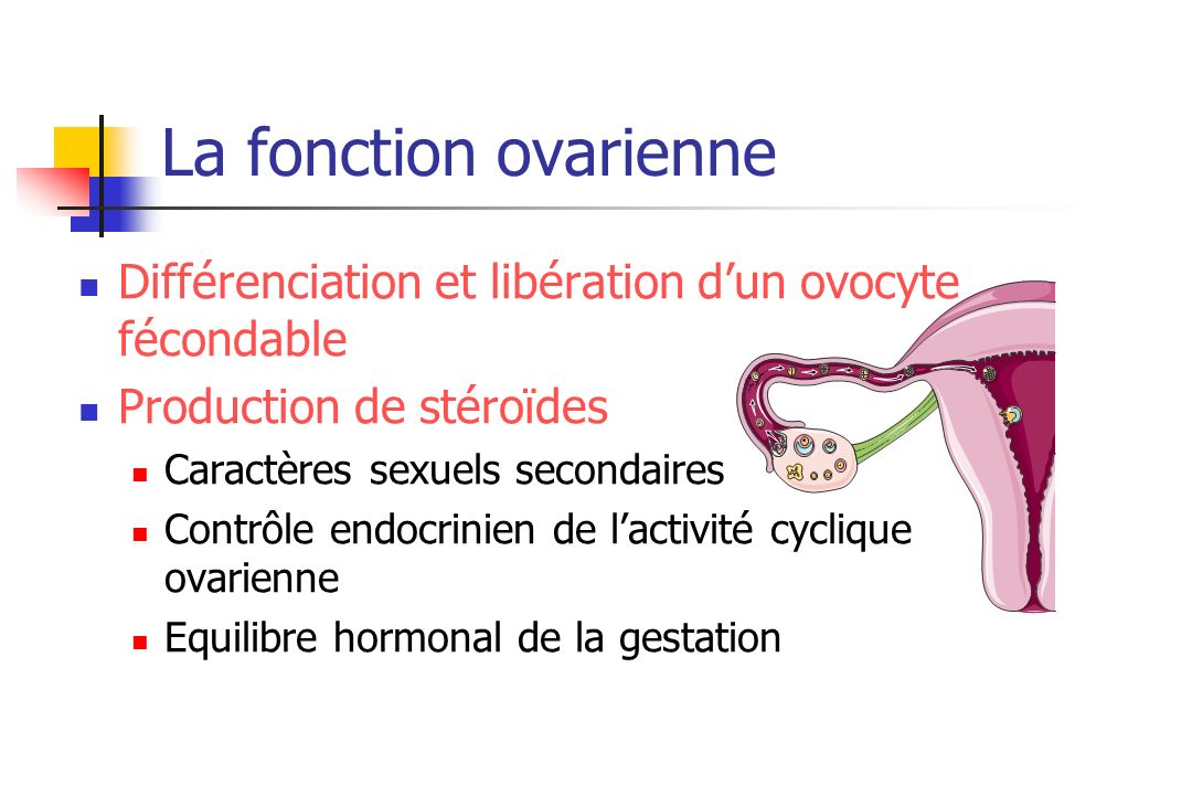 La fonction ovarienneDifférenciation et libération d'un ovocyte fécondable. Production de stéroïdes.