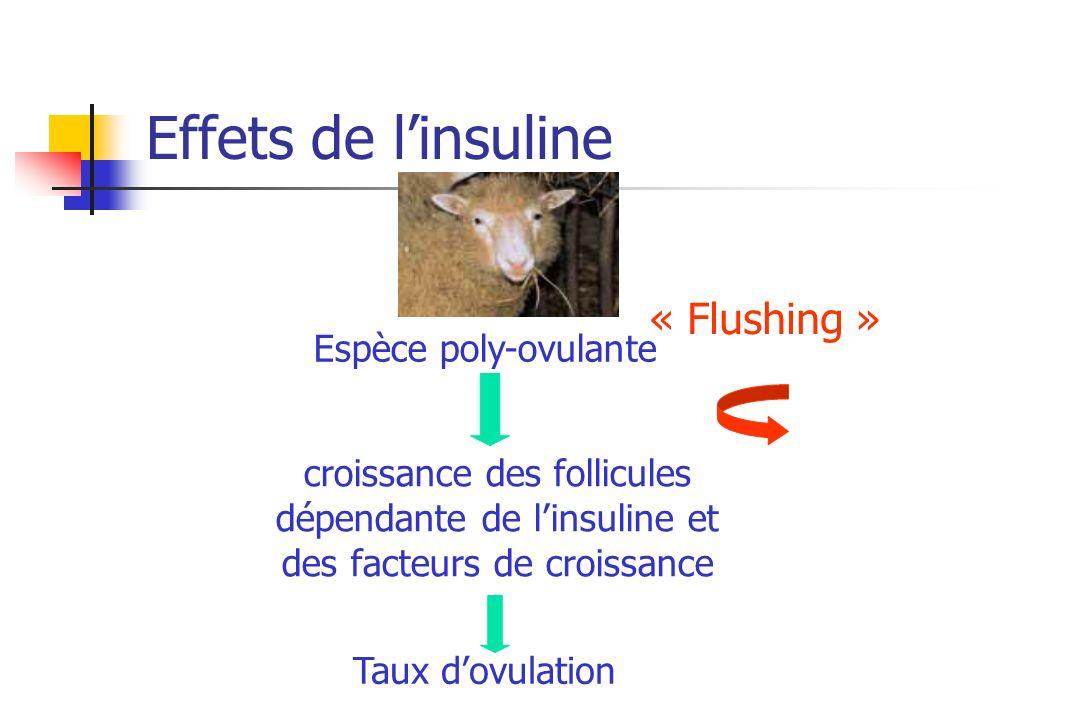 Effets de l'insuline « Flushing » Espèce poly-ovulante