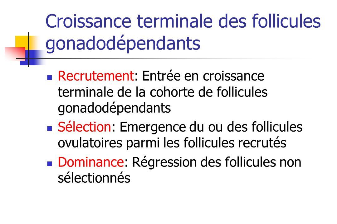 Croissance terminale des follicules gonadodépendants