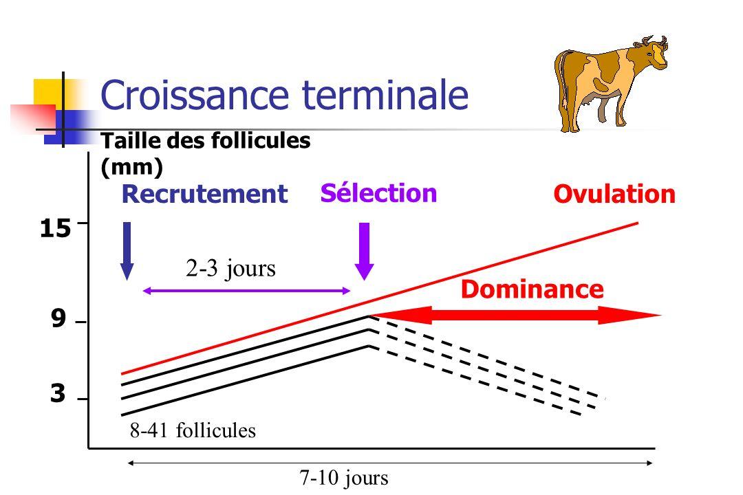 Croissance terminale Recrutement Sélection Ovulation 15 2-3 jours