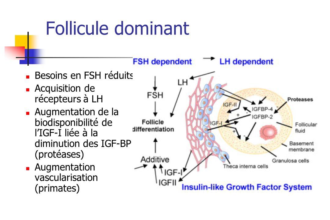Follicule dominant Besoins en FSH réduits