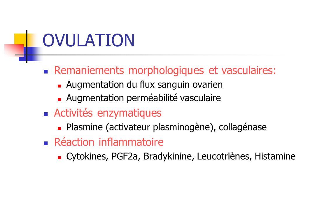 OVULATION Remaniements morphologiques et vasculaires: