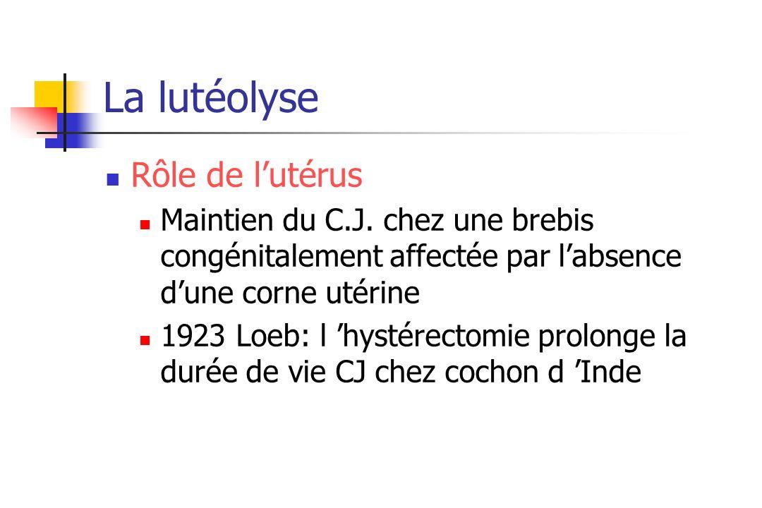 La lutéolyse Rôle de l'utérus