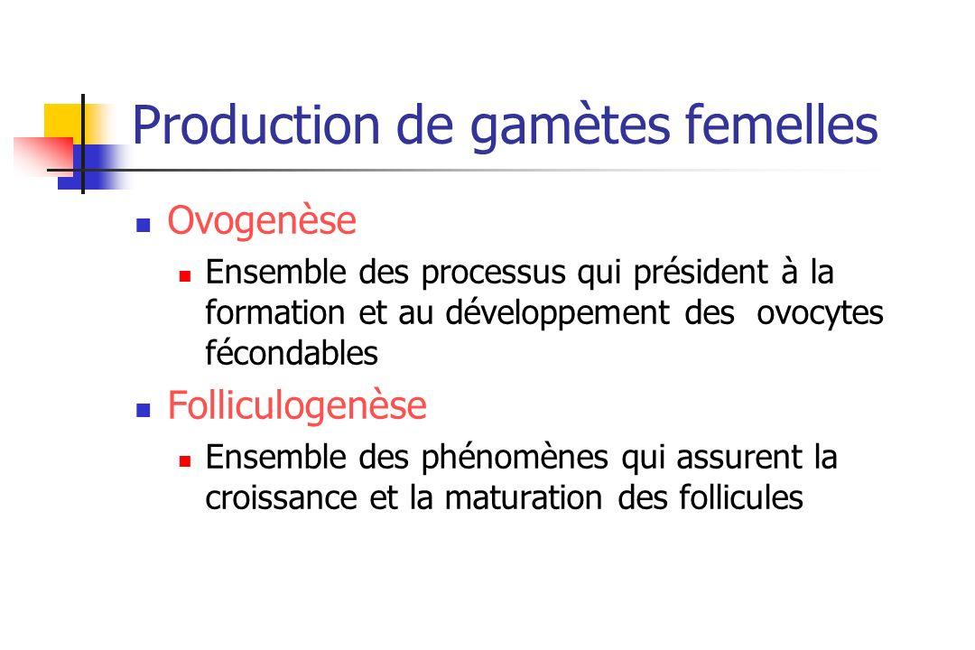 Production de gamètes femelles
