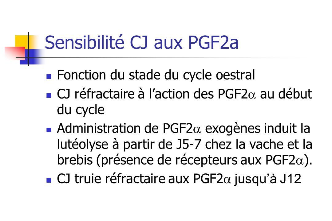 Sensibilité CJ aux PGF2a