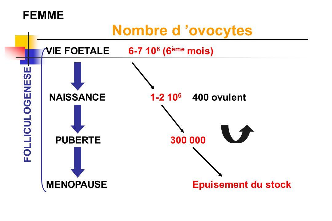 Nombre d 'ovocytes FEMME VIE FOETALE 6-7 106 (6ème mois) NAISSANCE