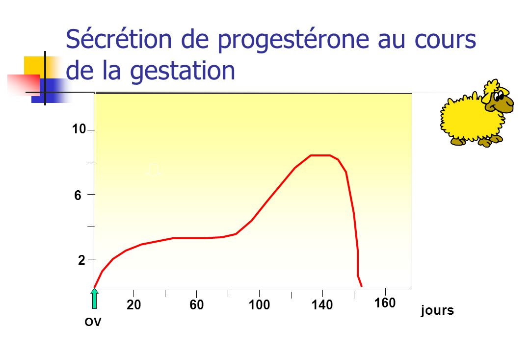Sécrétion de progestérone au cours de la gestation
