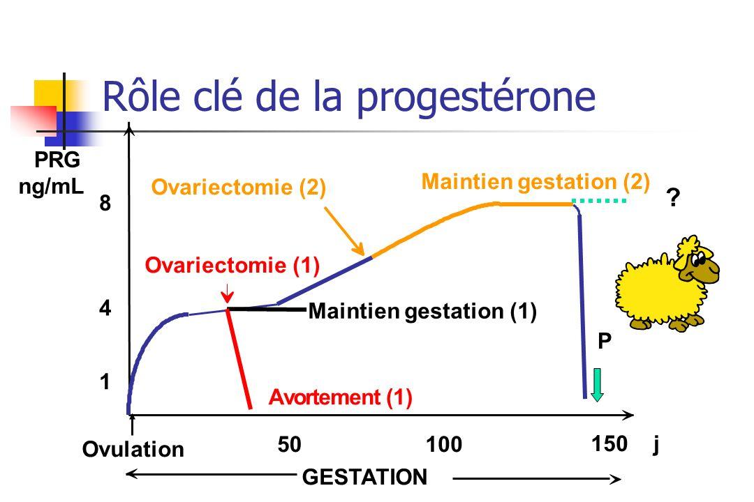 Rôle clé de la progestérone