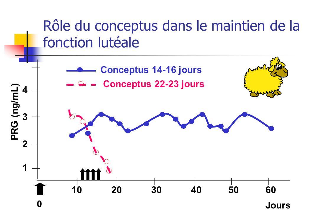 Rôle du conceptus dans le maintien de la fonction lutéale