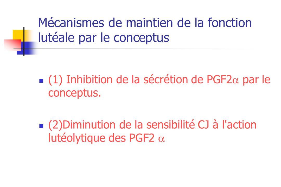 Mécanismes de maintien de la fonction lutéale par le conceptus