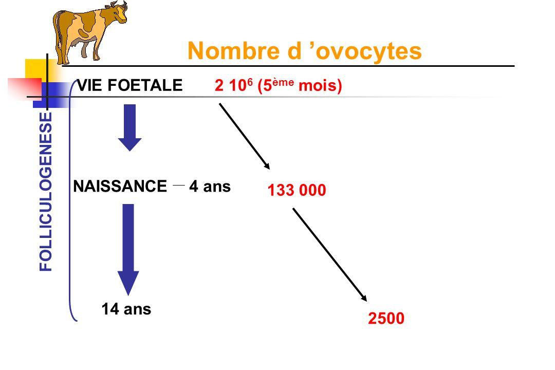 Nombre d 'ovocytes VIE FOETALE 2 106 (5ème mois) NAISSANCE 4 ans