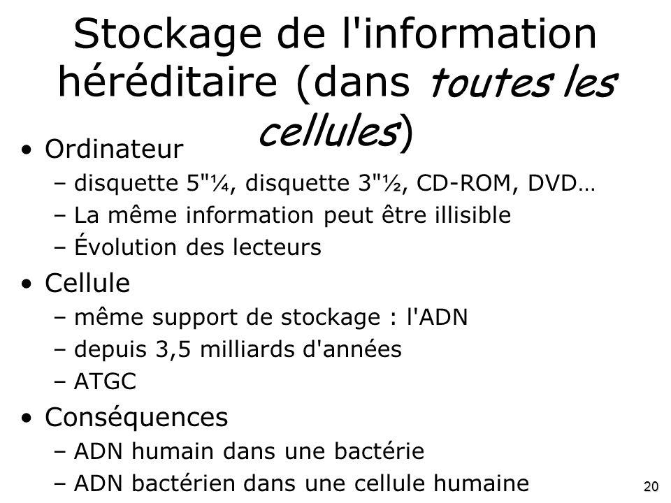 Stockage de l information héréditaire (dans toutes les cellules)